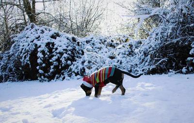 Snow Adventures by commandokittyy