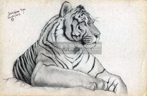 Indonchinese Tiger