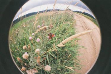 butterfly by TekilaCat