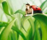 Ladybug by Mirix