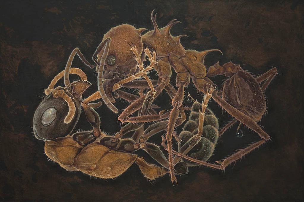 Ants80x120 by kos1604