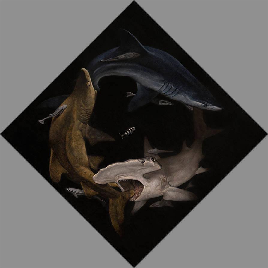 Sharks by kos1604