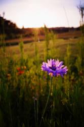 Flower of Hope by eddensheya
