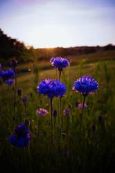 Blue by eddensheya