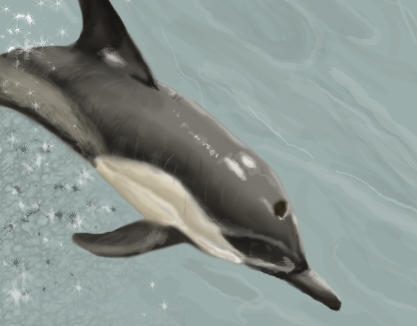 Dolphin by crypticFallon