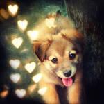 fluffy puppy by beorange
