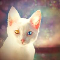 Eyes by beorange
