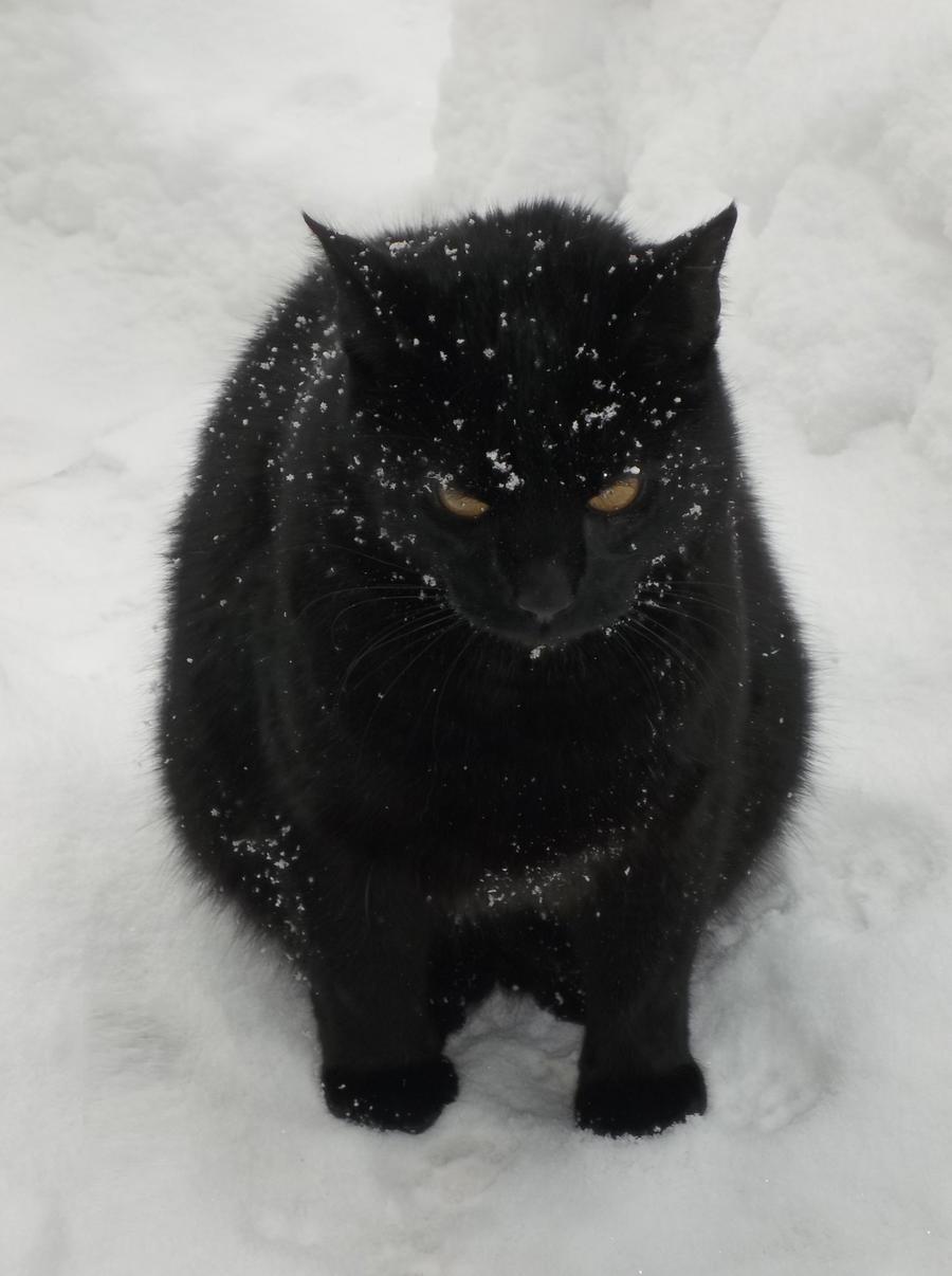 I hate snow...