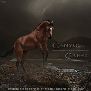 Canyon Avi by VIP-EquineArt