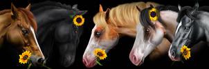 color wonder stables HEE
