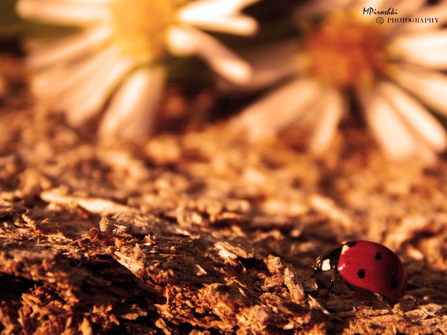 Ladybug by Piroshki-Photography