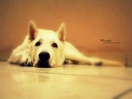 Balto's time by Piroshki-Photography