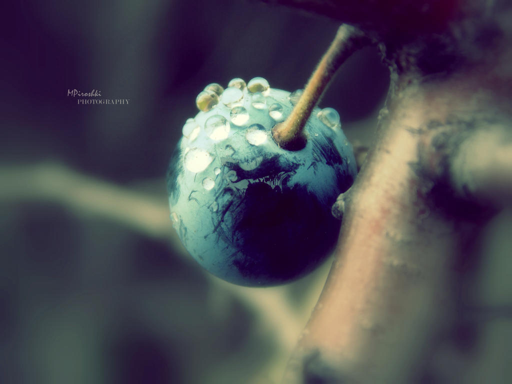 Dewy grape by Piroshki-Photography