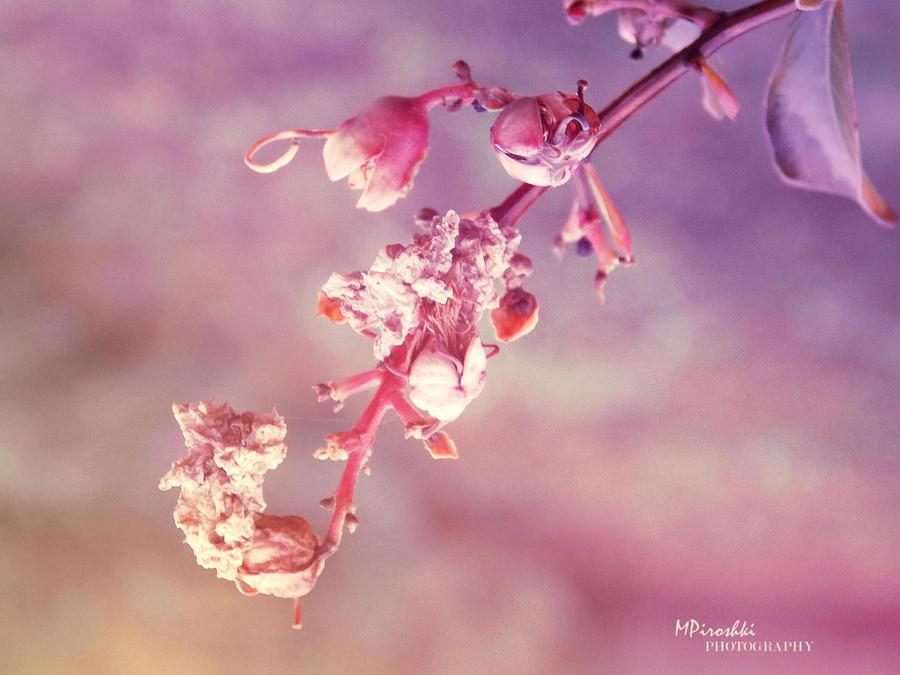 7 by Piroshki-Photography