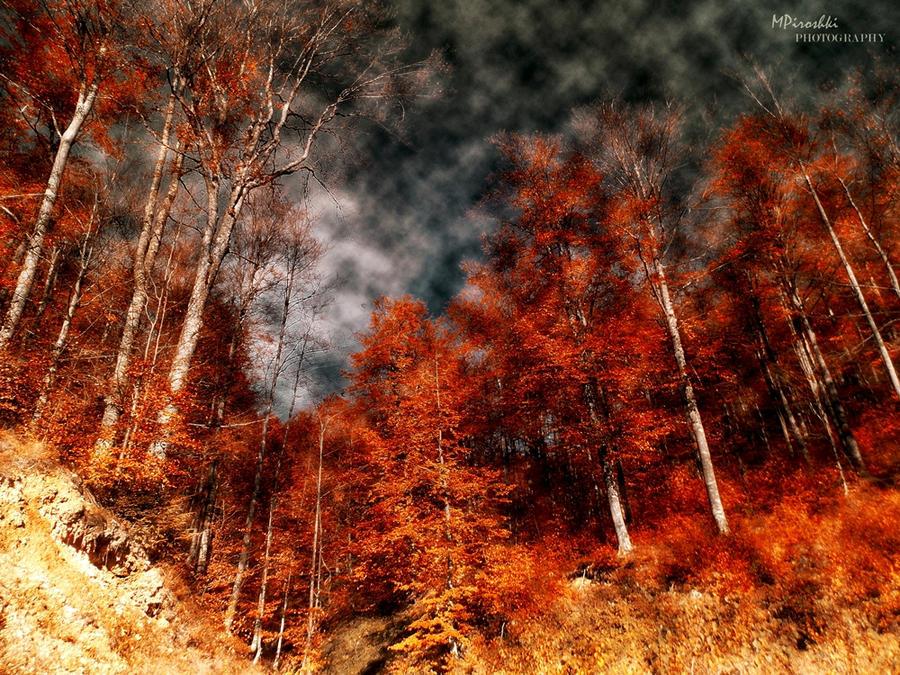 Surreal autumn by Piroshki-Photography