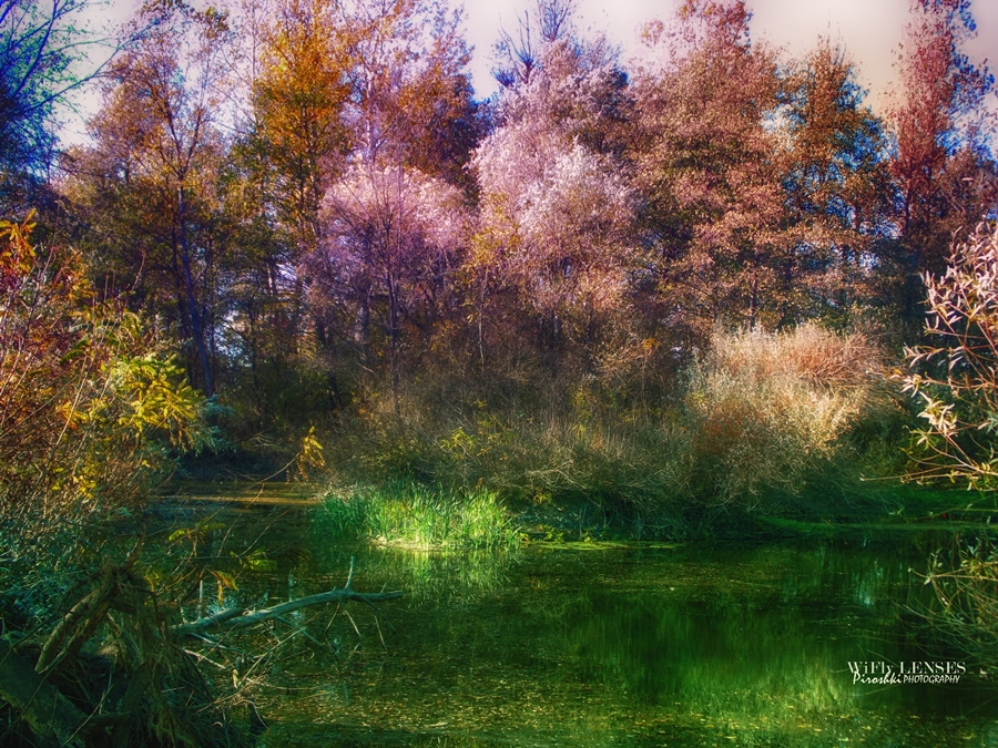 Realm of color by Piroshki-Photography