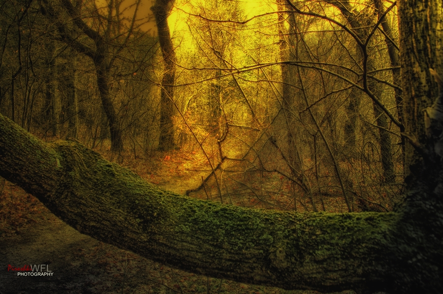 Poem about morning magic by Piroshki-Photography