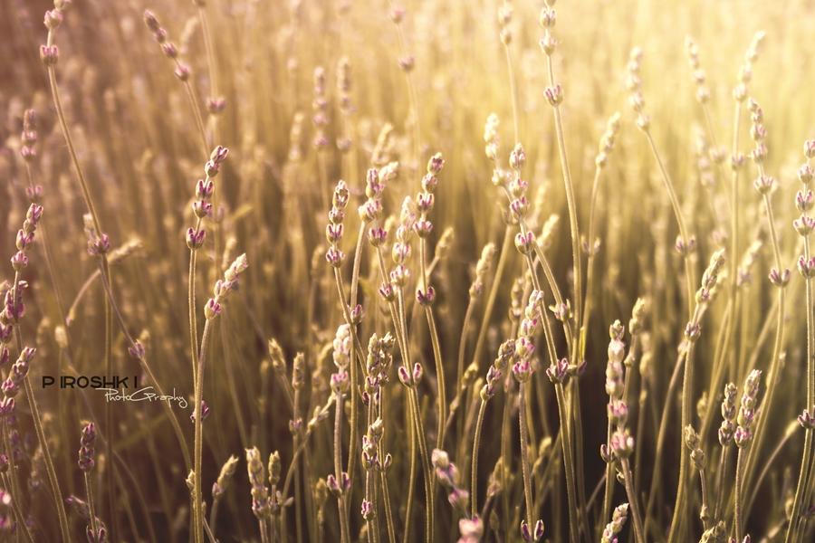 Sunny field by Piroshki-Photography