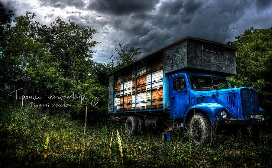 Sky full of bees by Piroshki-Photography