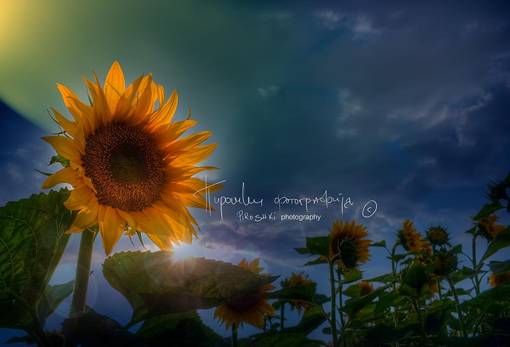 Heads up by Piroshki-Photography