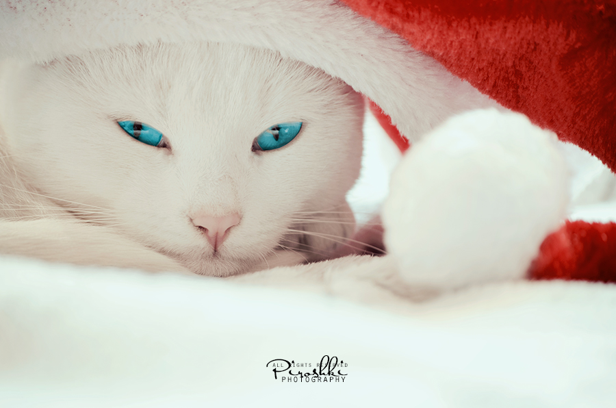Ice - Santa's little helper by Piroshki-Photography