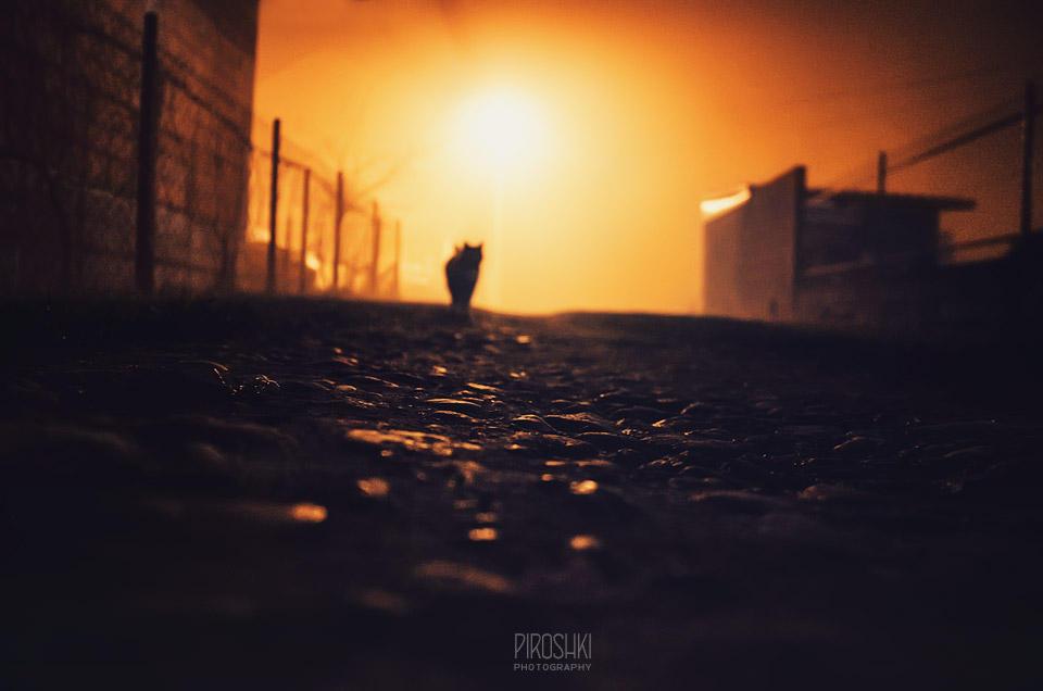 Shadows of the fog by Piroshki-Photography