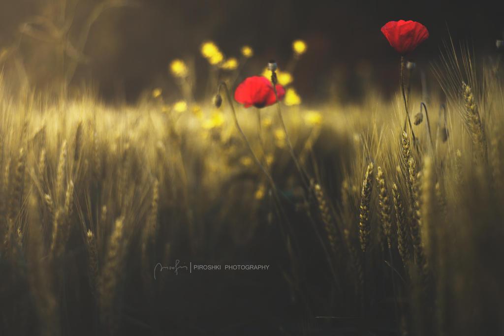 My poem of red by Piroshki-Photography