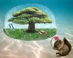 Sandy's Tree Dome