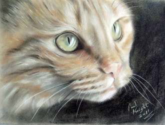 Le Chat Peu De Gingembre by astarvinartist