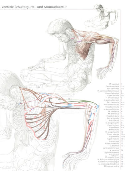 The study of human anatomy