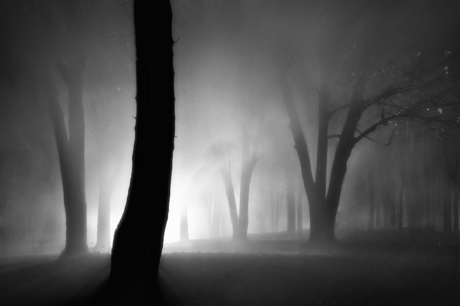 Magic forest by Vlad-Off-kru