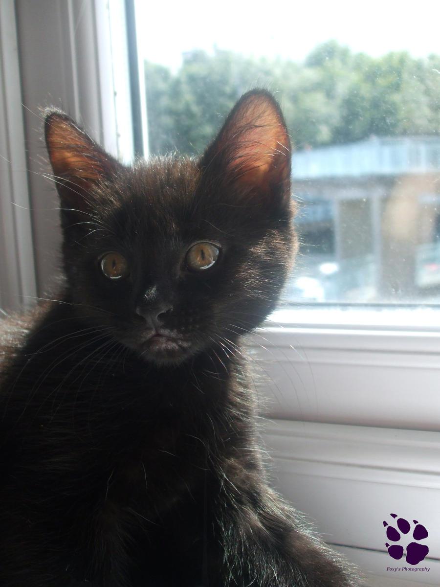 DA 45 - Missy Cat by LacedShadowDiamond