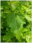 Refreshing (10.07.18) by Foxy-Poptart