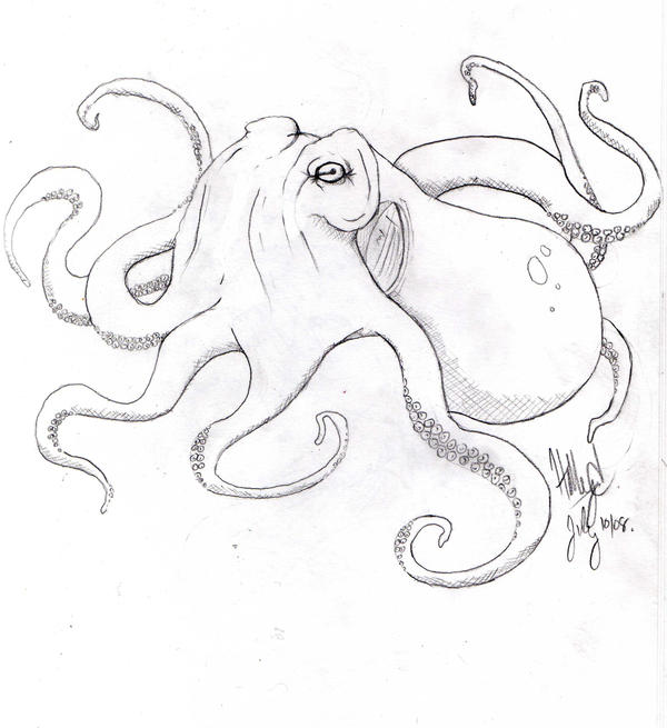 27 best Cephalopod images on Pinterest | Octopuses, Google ...