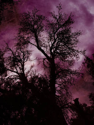 Touching Blighted Heavens by DroothR