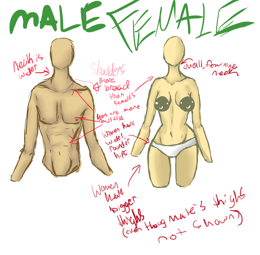 Male and Female Anatomy studies by ChocolateAvocado on DeviantArt
