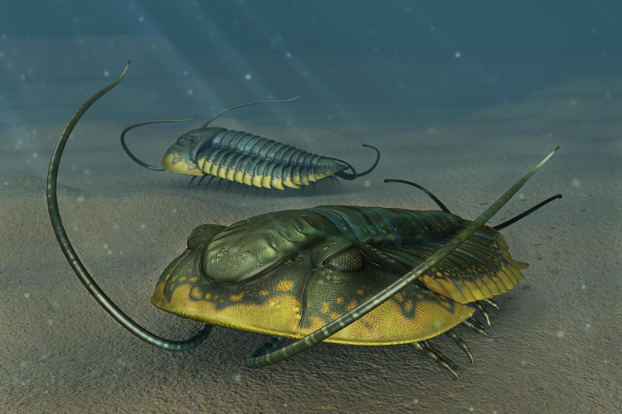 Trilobites - Ehmania sp. by Onikaizer