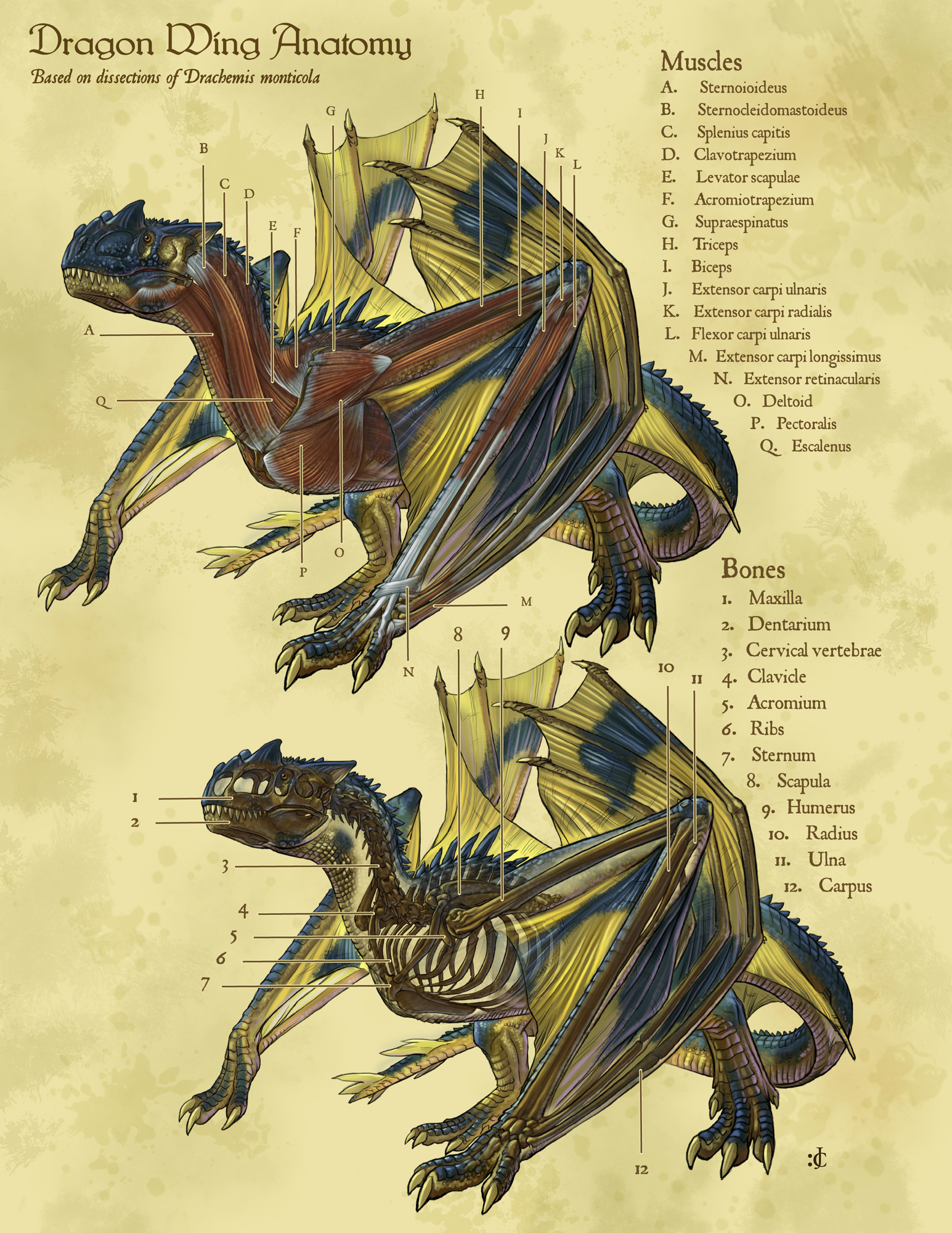 Displaying 17 gt images for todd lockwood dragon anatomy