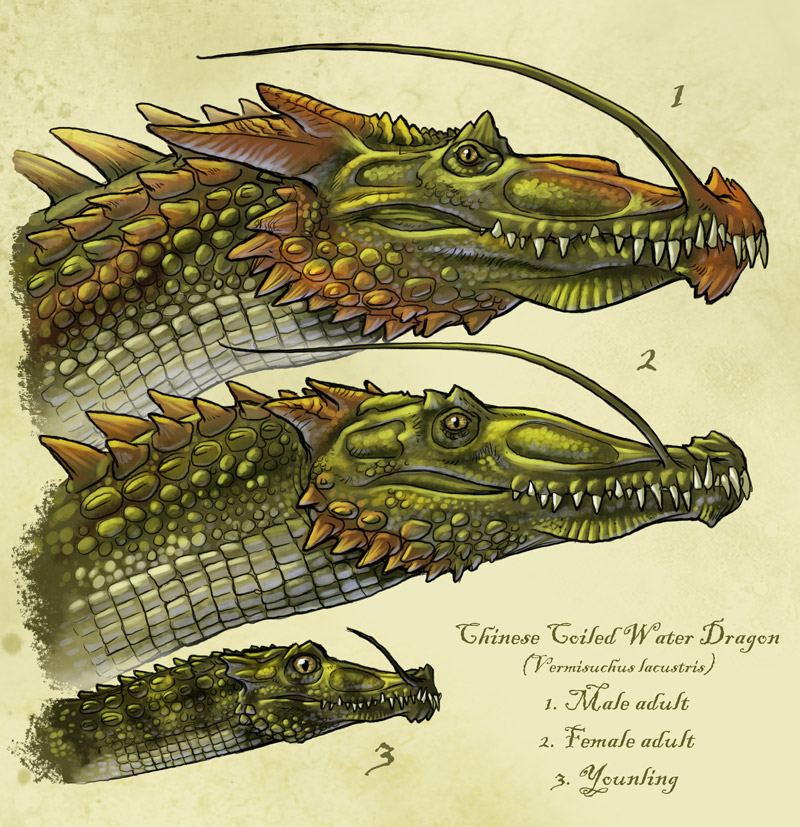 Chinese coiled dragon panlong by onikaizer on deviantart for Coiling dragon
