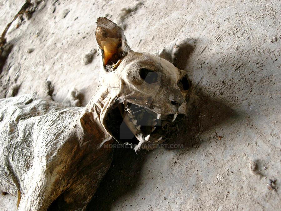 hilfe was ist das f r ein mumifiziertes tier tiere tierarzt gebiss. Black Bedroom Furniture Sets. Home Design Ideas