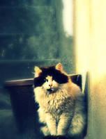 kitty by Deni1Kitty