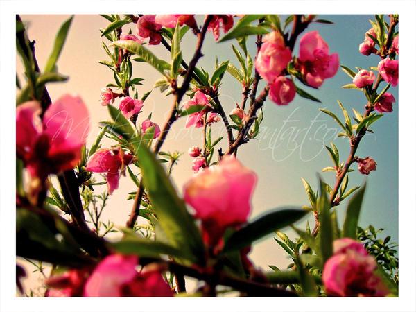 Spring by Miel-y-Sol