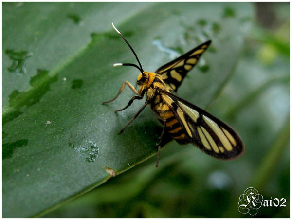 resting insect by pusakal1402
