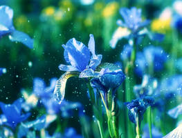 Blue flowers by MadisonStar