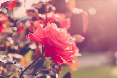 Romantic life by MadisonStar