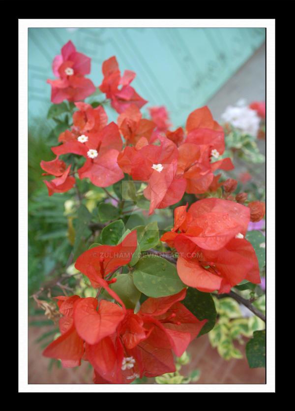 Bunga Kertas Merah By Zulhamy On Deviantart
