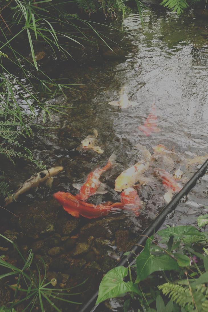 Koi pond by ken griffith on deviantart for Koi pond art