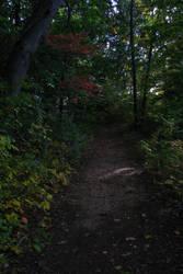 Shady Path by Ken-Griffith