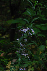 Tiny Flowers by Ken-Griffith
