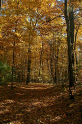 Golden Woods by Ken-Griffith